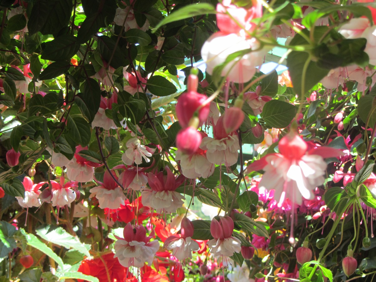 Trip to Vancouver, Victoria BC - Colorful flowers at Buchart Garden - Devens Journey